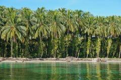 Tropikalny linii brzegowych kokosowych drzew morze karaibskie Zdjęcia Stock