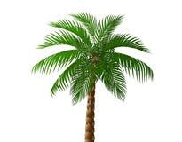Tropikalny luksusowy ciemnozielony drzewko palmowe ilustracja ilustracja wektor