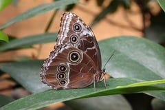 Tropikalny motyl Fotografia Royalty Free