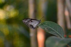 Tropikalny motyl Bai motyla i orchidei gospodarstwo rolne Mae obręcz Chiang Mai prowincja Tajlandia Zdjęcia Royalty Free
