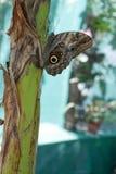 Tropikalni motyle Zdjęcia Stock