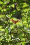 Tropikalny motyl wśród ulistnienia Fotografia Royalty Free