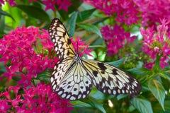 tropikalny motyli kwiat Obraz Stock