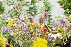 Tropikalny motyli odpoczywać Fotografia Stock