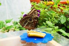 Tropikalny motyli odpoczywać Zdjęcia Royalty Free