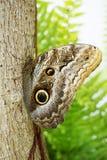 Tropikalny motyli odpoczywać Obraz Stock