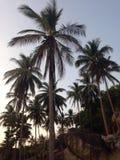 Tropikalny mroczny słońce podkreśla palmy Obraz Royalty Free