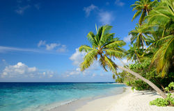 tropikalny na plaży obraz stock