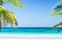 Tropikalny nadmorski widok, drzewka palmowe nad turkusowym morzem przy egzotyczną piaskowatą plażą w morzu karaibskim i Obraz Royalty Free