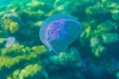 Tropikalny oceanu życie Rafa koralowa pełno rybi unosić się pod wody powierzchnią Sunbeams światło przez czochr Zdjęcia Royalty Free