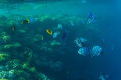 Tropikalny oceanu życie Rafa koralowa pełno rybi unosić się pod wody powierzchnią Sunbeams światło przez czochr Zdjęcie Stock