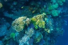 Tropikalny oceanu życie Rafa koralowa pełno rybi unosić się pod wody powierzchnią Sunbeams światło przez czochr Obrazy Stock