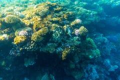 Tropikalny oceanu życie Rafa koralowa pełno rybi unosić się pod wody powierzchnią Sunbeams światło przez czochr Zdjęcie Royalty Free