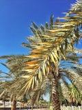 tropikalny odwrotowy Zdjęcia Stock