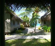 Tropikalny ogród obraz royalty free