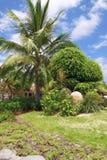 Tropikalny ogród zdjęcie royalty free