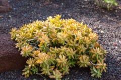 Tropikalny ogród w oaza parku na Fuerteventura Wyspa Kanaryjska Obraz Stock