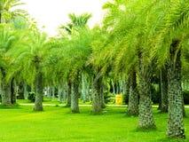 Tropikalny ogród z drzewkami palmowymi i zieloną trawą Zdjęcie Royalty Free