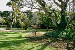 Tropikalny ogród z ogromnymi drzewami dla cienia i relaksu zdjęcia stock