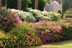 Tropikalny ogrodowy kwiatu ogrodzenie Obrazy Stock