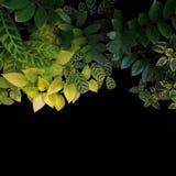 Tropikalny ogrodowy projekt z kamiennymi ścieżki i interiorscape roślinami Obraz Royalty Free