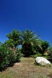 tropikalny ogrodu Zdjęcie Royalty Free