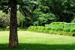 tropikalny ogrodu zdjęcia royalty free