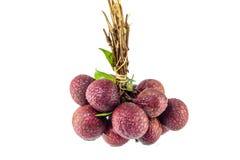 tropikalny owocowy lychee Obrazy Royalty Free