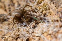 Tropikalny pająk makro- fotografia royalty free