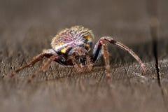 Tropikalny pająka zakończenie up zdjęcia royalty free
