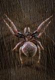 Tropikalny pająka zakończenie up fotografia stock