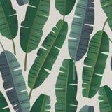 Tropikalny palmowy banan opuszcza bezszwowego wzór Zdjęcia Stock