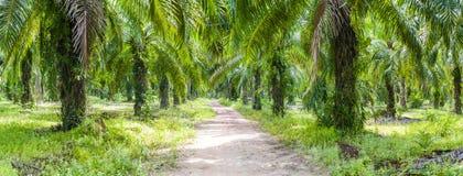 Tropikalny palmowy las w Koh Lanta Zdjęcie Royalty Free
