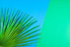 Tropikalny palmowy liść na pastelowym błękitnym i zielonym tle fotografia stock
