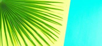 Tropikalny palmowy liść z kolorowym sztandaru tłem Zdjęcia Royalty Free