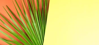 Tropikalny palmowy liść z kolorowym tłem Obrazy Stock