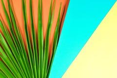 Tropikalny palmowy liść z kolorowym tłem Fotografia Stock