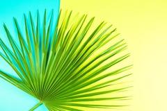 Tropikalny palmowy liść z kolorowym tłem Zdjęcie Royalty Free