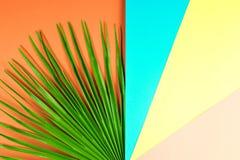 Tropikalny palmowy liść z kolorowym tłem Zdjęcie Stock