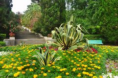 Tropikalny park Obraz Royalty Free