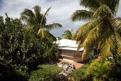 tropikalny park Obrazy Royalty Free