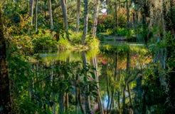 Tropikalny park, jezioro, odbicie w wodzie Islandzki mech obwieszenie od gałąź drzewa Wrażenie, harmonia medytacja Fotografia Stock