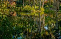 Tropikalny park, jezioro, odbicie w wodzie Islandzki mech obwieszenie od gałąź drzewa Wrażenie, harmonia medytacja Obrazy Stock