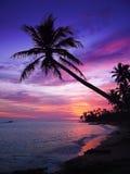 tropikalny piękny zachód słońca Obrazy Royalty Free