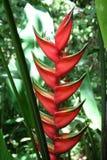 tropikalny piękny kwiat Zdjęcie Royalty Free