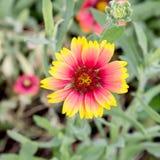 tropikalny piękny kwiat Fotografia Stock