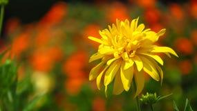 tropikalny piękny kwiat Zdjęcia Royalty Free
