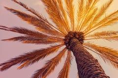Tropikalny plażowy tło z drzewkiem palmowym zdjęcia stock