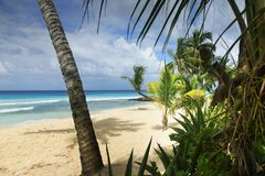 tropikalny plażowy drzewko palmowe Zdjęcia Royalty Free