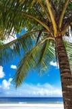 Tropikalny plażowy drzewko palmowe Trinidad i Tobago marakasy Trzymać na dystans niebieskie niebo i morze Zdjęcia Royalty Free